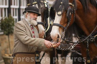 Drayman Roger Hughes giving his Horses some Liquid Refreshment   outside the Reindeer Inn