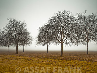 Trees on a misty day