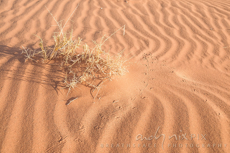 Insect tracks on desert sand formations and plants