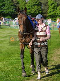 Race 7 Open Maiden 2m4f - Meynell and South Staffs at Garthorpe, 2nd June 2013