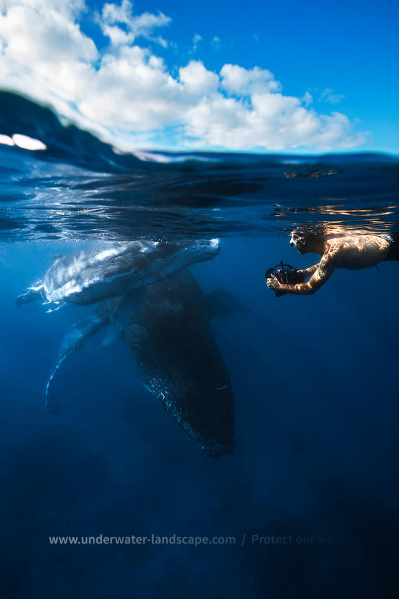 Humpback whale and calf : The encounter