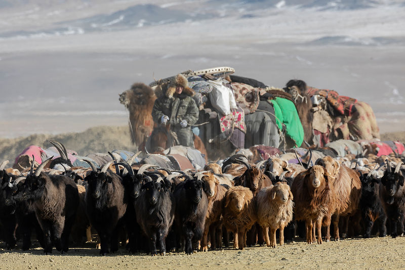 Horsemen, Sheep, Goats and Camels on the Migration