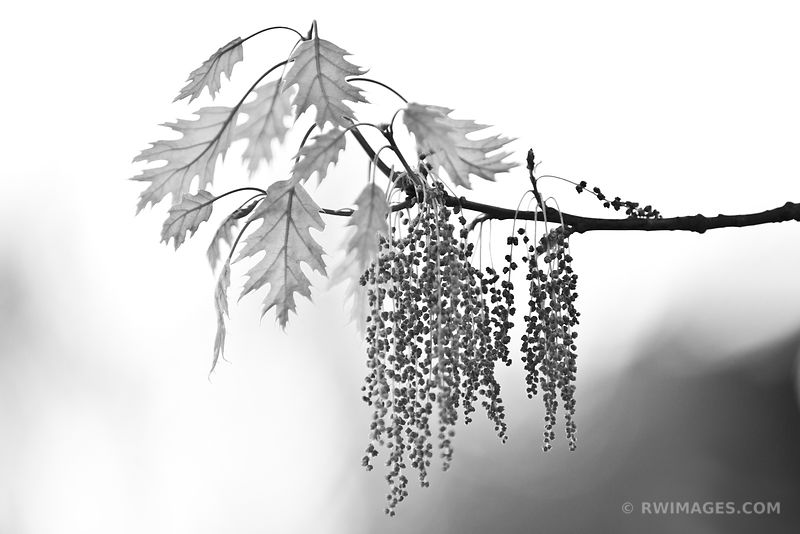 Botanicals - Black and White Photos