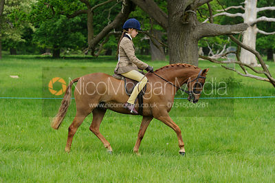 Class 39 - BSPS Novice Show Hunter Pony photos