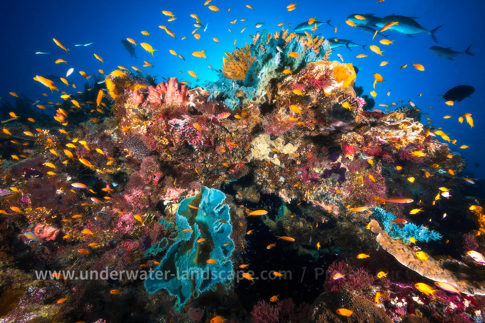 Underwater photo - Fish  in the lagoon of Moheli