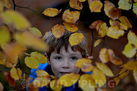 Young boy peeping through beech leaves in woodland in autumn Norfolk