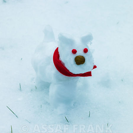 Dog shaped snowman