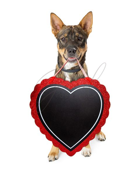 Dog Carrying Valentine Heart Sign