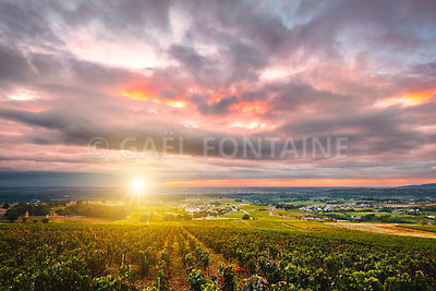 Sunrise with sunflare over vineyards of Beaujolais, France