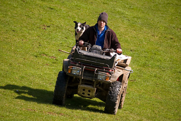 Shepherd and Sheep Dog on Quadbike