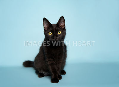 Black cat sitting on light blue background