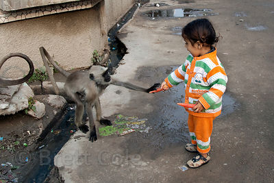 A small girl feeds carrots to a langur monkey in the streets of Pushkar, Rajasthan, India
