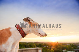 greyhound overlooking sunrise and city