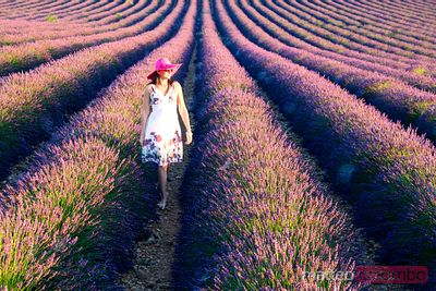 Woman in lavender field in full bloom, Provence, France