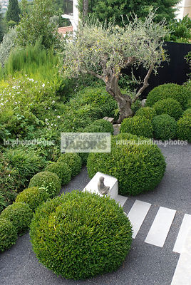 Buxus sempervirens (Buis), Olea europaea (Olivier), Conception et réalisation :  James et William Hartley. English Garden Group