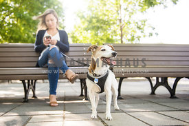 Woman on her phone with dog in a park