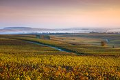 Vineyards in autumn at dawn, Champagne, France