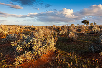 Semi arid grazing country, South Australia.