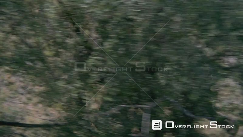 Aerial medium shot side view of one elephant running through bushveld and behind green trees Zimbabwe