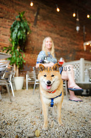 shiba inu at outdoor restuarant with owner