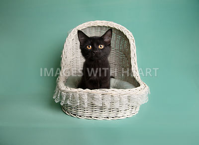 Black kitten in white wicker baby basket