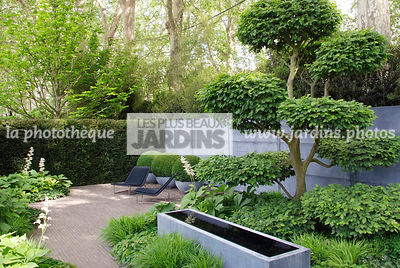 Carpinus communis, Cloud [shape], Contemporary garden, Digital, Topiary