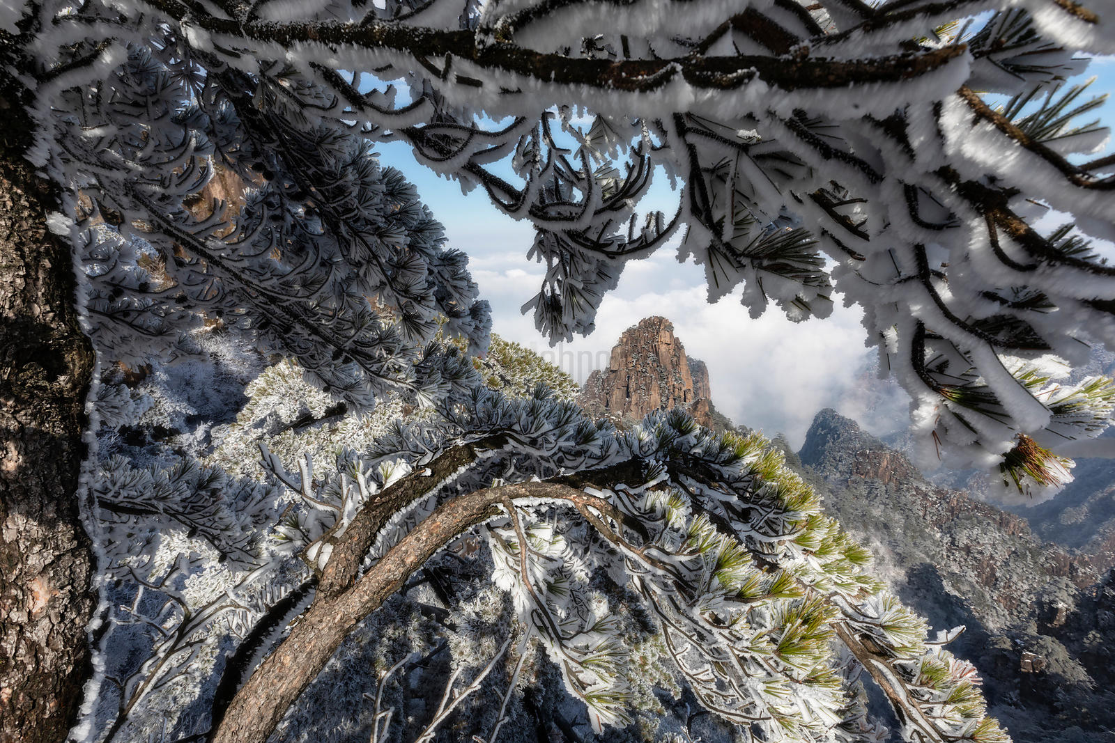 Huangshan Mountains Framed through a Rime Ice-Covered Pine