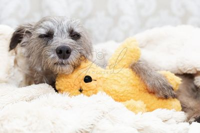 Sleepy Dog With Stuffed Bear