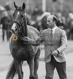Tim Price and RINGWOOD SKY BOY at the trot up, Land Rover Burghley Horse Trials 2018