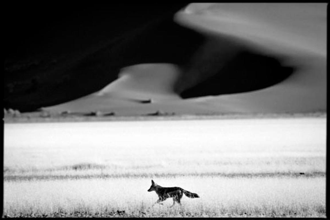 7858-Jackal_in_the_plain_Namibia_2004_Laurent_Baheux