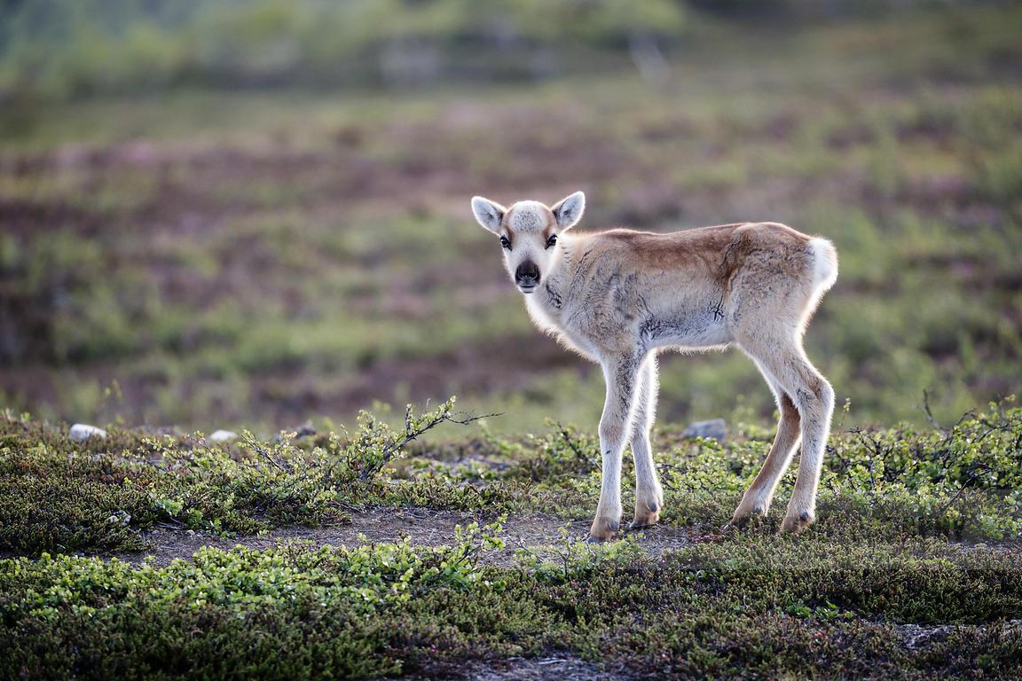 Rayann Elzein Photography | Cute baby reindeer