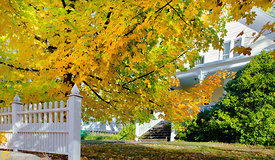 Fall colors on the Street, Nevada City #5