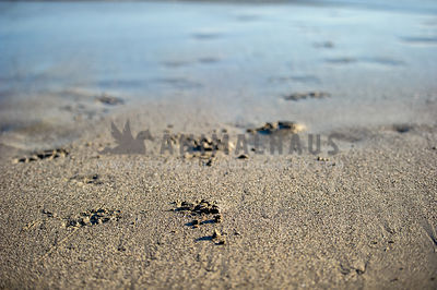 Pawprints on the beach