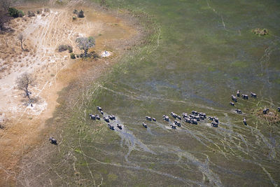 Aerial view of African elephants (Loxodonta africana)moving through wetland in the Okavango delta, Northern Botswana, taken o...