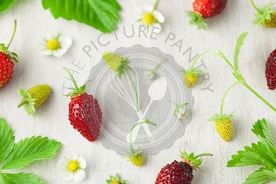 Homegrown Alpine Strawberries