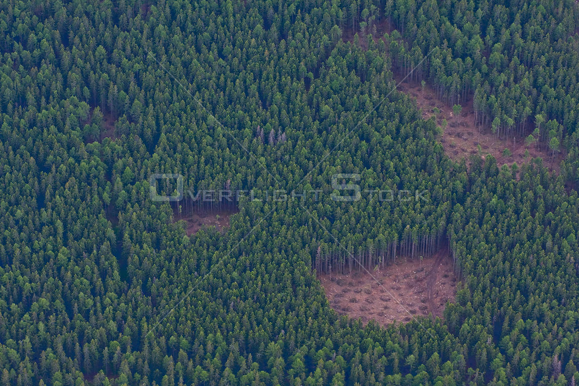 Aerial view of small clear cuts in managed spruce forest. High Tatras, Slovakia, June 2009.