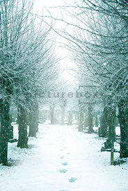 An atmospheric image of a tree lined, footprints in a snow covered path, in a churchyard, in winter.