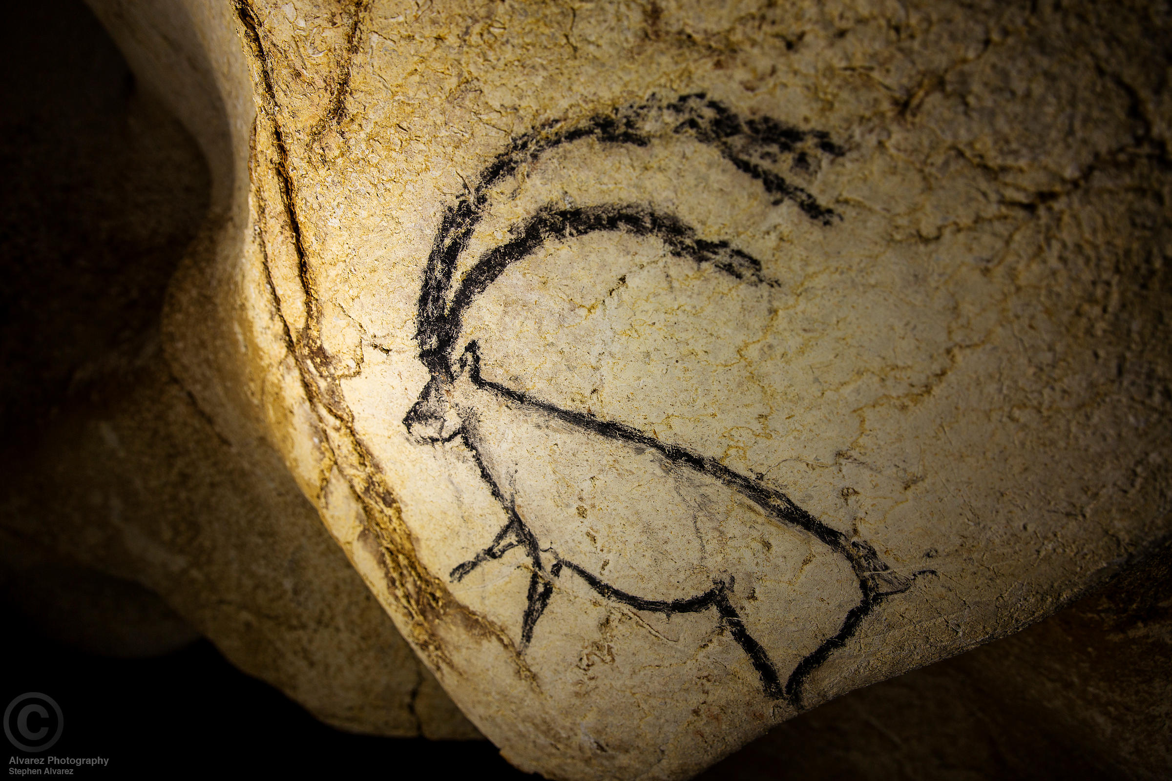 An ibex in the gallery of the Megaceros, Chauvet Cave.