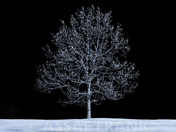 Snowy Tree Winter