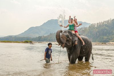 Laos, Luang Prabang. tourists bathing on an elephant in the Mekong