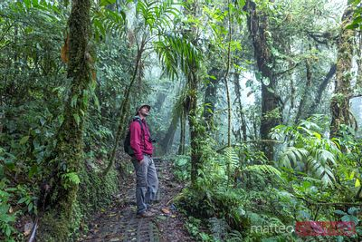 Man hiking in Monteverde Cloud forest, Costa Rica