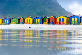 Single seagull standing on the beach in front of the iconic  colourful bathing huts reflected in wet sand, with Muizenberg mo...