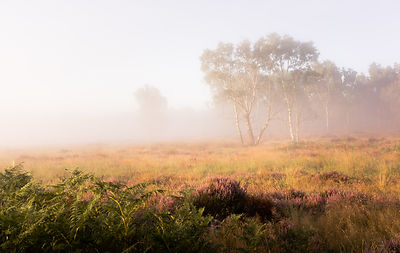 Summer mists and heather