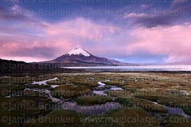 Parinacota volcano and bofedales on shore of Lake Chungará after sunset, Lauca National Park, Region XV, Chile