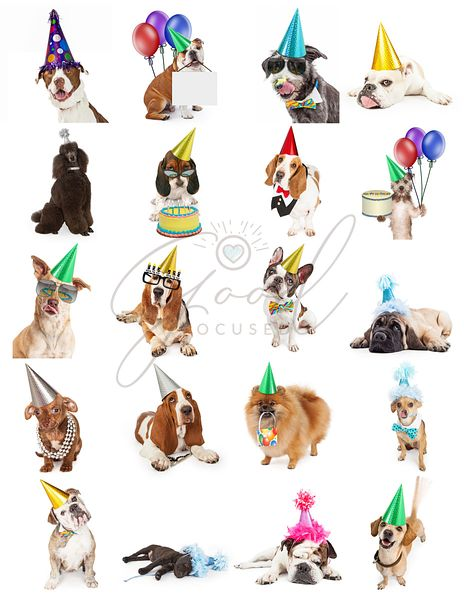 Collection of Birthday Party Dog Photos