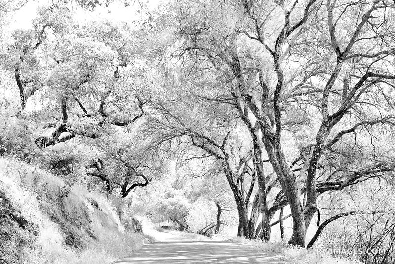COUNTRY ROAD NAPA VALLEY BLACK AND WHITE NAPA CALIFORNIA LANDSCAPE