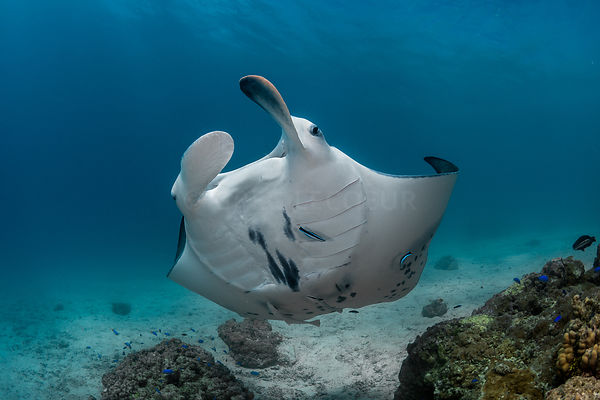 Manta, cleaning station, Tikehau