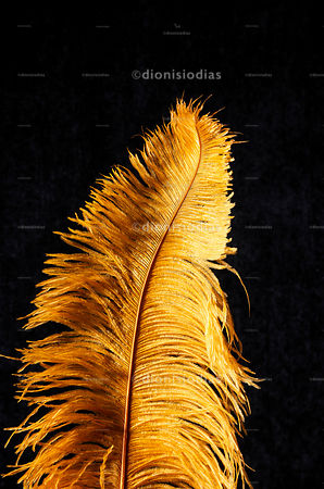 Feather Isolated on black