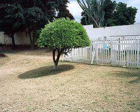 Tree, Kingston, Jamaica