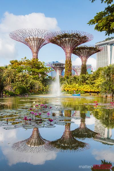 Supertree grove reflected, Gardens by the Bay, Singapore